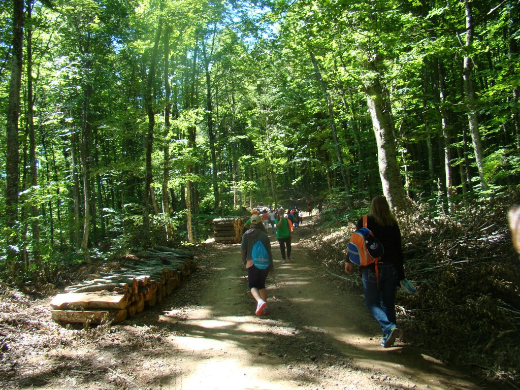 forests LIFEGENMON